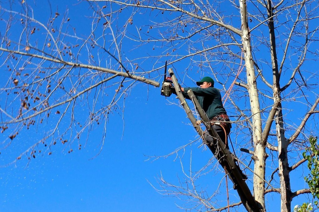 Contact Us-Davenport FL Tree Trimming and Stump Grinding Services-We Offer Tree Trimming Services, Tree Removal, Tree Pruning, Tree Cutting, Residential and Commercial Tree Trimming Services, Storm Damage, Emergency Tree Removal, Land Clearing, Tree Companies, Tree Care Service, Stump Grinding, and we're the Best Tree Trimming Company Near You Guaranteed!