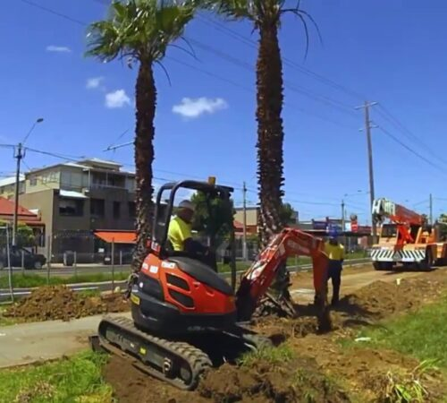 Palm Tree Removal-Davenport FL Tree Trimming and Stump Grinding Services-We Offer Tree Trimming Services, Tree Removal, Tree Pruning, Tree Cutting, Residential and Commercial Tree Trimming Services, Storm Damage, Emergency Tree Removal, Land Clearing, Tree Companies, Tree Care Service, Stump Grinding, and we're the Best Tree Trimming Company Near You Guaranteed!