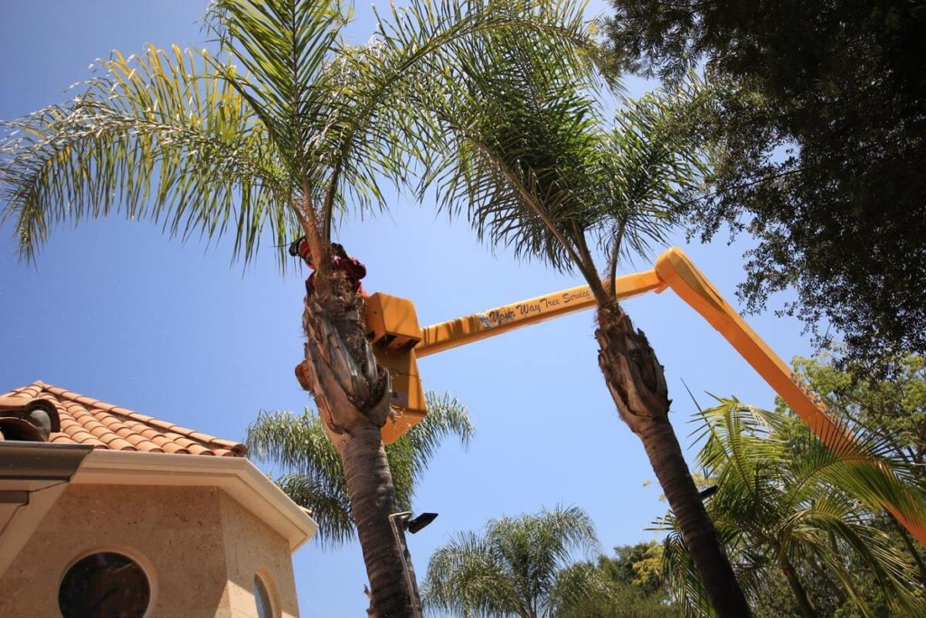Palm Tree Trimming-Davenport FL Tree Trimming and Stump Grinding Services-We Offer Tree Trimming Services, Tree Removal, Tree Pruning, Tree Cutting, Residential and Commercial Tree Trimming Services, Storm Damage, Emergency Tree Removal, Land Clearing, Tree Companies, Tree Care Service, Stump Grinding, and we're the Best Tree Trimming Company Near You Guaranteed!