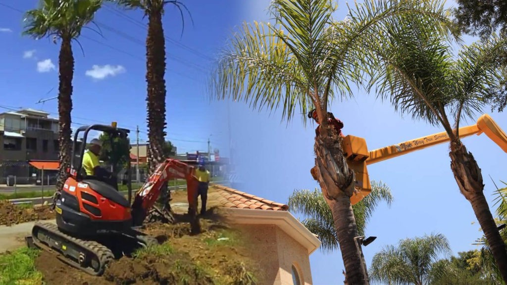 Palm tree trimming & palm tree removal-Davenport FL Tree Trimming and Stump Grinding Services-We Offer Tree Trimming Services, Tree Removal, Tree Pruning, Tree Cutting, Residential and Commercial Tree Trimming Services, Storm Damage, Emergency Tree Removal, Land Clearing, Tree Companies, Tree Care Service, Stump Grinding, and we're the Best Tree Trimming Company Near You Guaranteed!