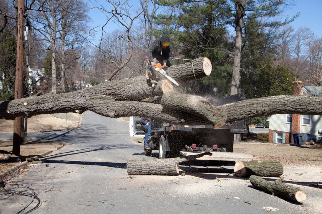 Residential Tree Services-Davenport FL Tree Trimming and Stump Grinding Services-We Offer Tree Trimming Services, Tree Removal, Tree Pruning, Tree Cutting, Residential and Commercial Tree Trimming Services, Storm Damage, Emergency Tree Removal, Land Clearing, Tree Companies, Tree Care Service, Stump Grinding, and we're the Best Tree Trimming Company Near You Guaranteed!