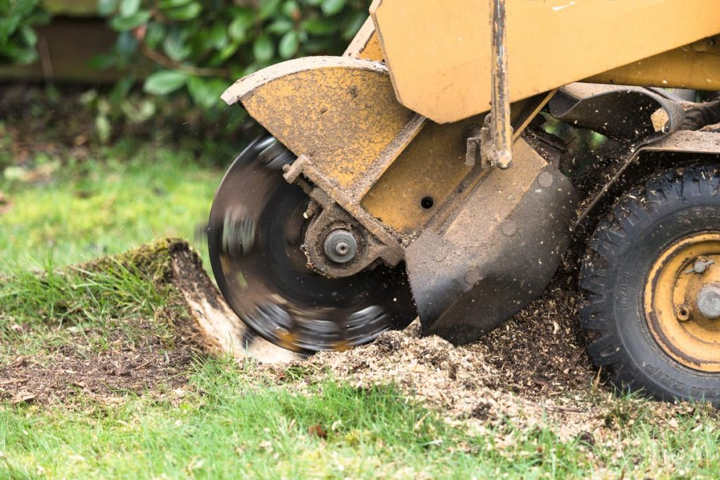 Stump Grinding-Davenport FL Tree Trimming and Stump Grinding Services-We Offer Tree Trimming Services, Tree Removal, Tree Pruning, Tree Cutting, Residential and Commercial Tree Trimming Services, Storm Damage, Emergency Tree Removal, Land Clearing, Tree Companies, Tree Care Service, Stump Grinding, and we're the Best Tree Trimming Company Near You Guaranteed!