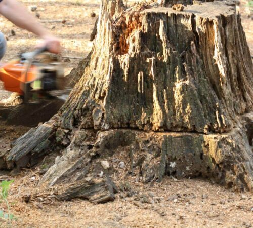 Stump Removal-Davenport FL Tree Trimming and Stump Grinding Services-We Offer Tree Trimming Services, Tree Removal, Tree Pruning, Tree Cutting, Residential and Commercial Tree Trimming Services, Storm Damage, Emergency Tree Removal, Land Clearing, Tree Companies, Tree Care Service, Stump Grinding, and we're the Best Tree Trimming Company Near You Guaranteed!