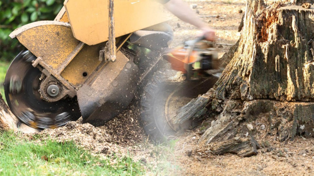 Stump grinding & removal-Davenport FL Tree Trimming and Stump Grinding Services-We Offer Tree Trimming Services, Tree Removal, Tree Pruning, Tree Cutting, Residential and Commercial Tree Trimming Services, Storm Damage, Emergency Tree Removal, Land Clearing, Tree Companies, Tree Care Service, Stump Grinding, and we're the Best Tree Trimming Company Near You Guaranteed!