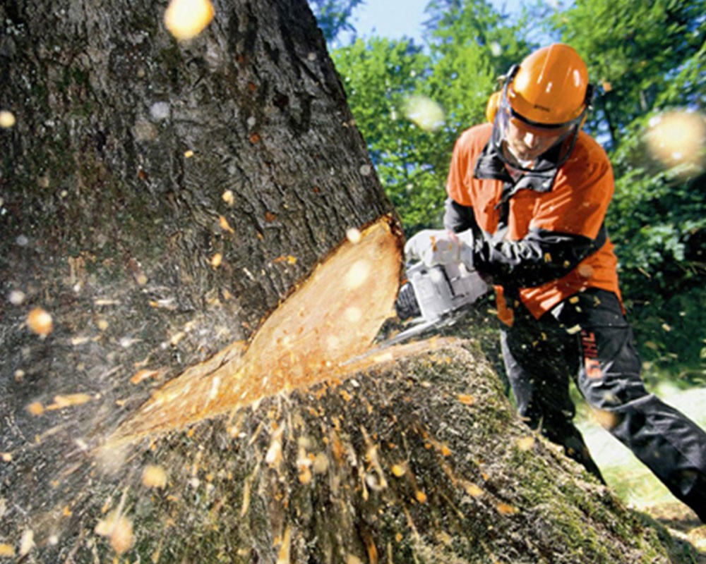 Tree Cutting-Davenport FL Tree Trimming and Stump Grinding Services-We Offer Tree Trimming Services, Tree Removal, Tree Pruning, Tree Cutting, Residential and Commercial Tree Trimming Services, Storm Damage, Emergency Tree Removal, Land Clearing, Tree Companies, Tree Care Service, Stump Grinding, and we're the Best Tree Trimming Company Near You Guaranteed!