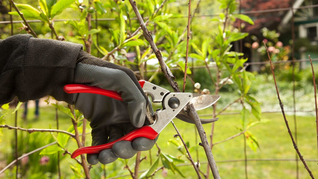 Tree Pruning-Davenport FL Tree Trimming and Stump Grinding Services-We Offer Tree Trimming Services, Tree Removal, Tree Pruning, Tree Cutting, Residential and Commercial Tree Trimming Services, Storm Damage, Emergency Tree Removal, Land Clearing, Tree Companies, Tree Care Service, Stump Grinding, and we're the Best Tree Trimming Company Near You Guaranteed!