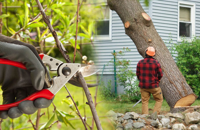 Tree pruning & tree removal-Davenport FL Tree Trimming and Stump Grinding Services-We Offer Tree Trimming Services, Tree Removal, Tree Pruning, Tree Cutting, Residential and Commercial Tree Trimming Services, Storm Damage, Emergency Tree Removal, Land Clearing, Tree Companies, Tree Care Service, Stump Grinding, and we're the Best Tree Trimming Company Near You Guaranteed!